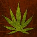 KushCall logo
