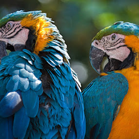 Buddies Cleaning Up by Brent Morris - Animals Birds ( , blue, orange. color )