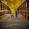 fall2014drewbren6 - print 16x10.jpg
