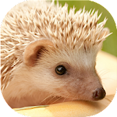 Hedgehogs Live Wallpaper