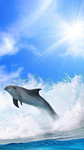 イルカは壁紙ライブ