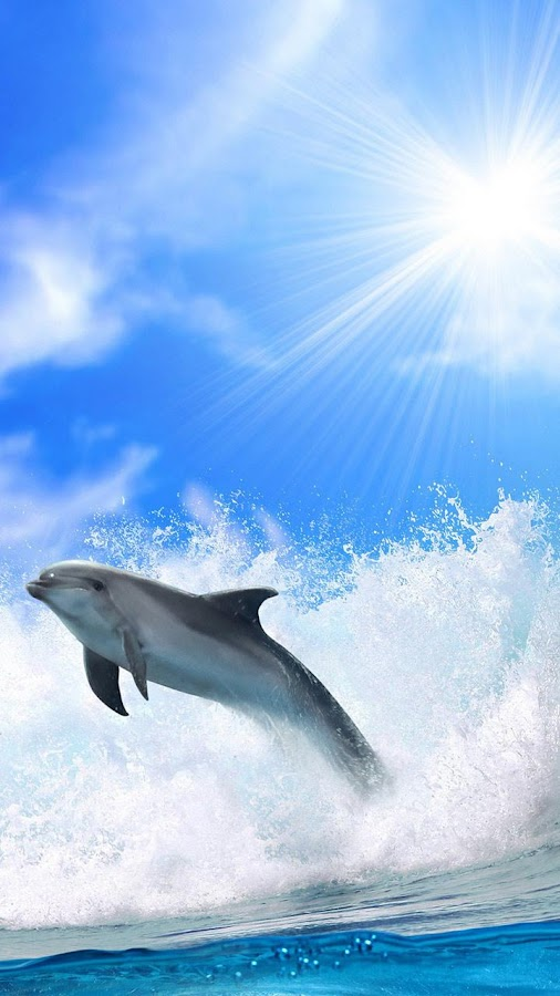 Dolphins Live Wallpaper- screenshot