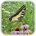 Alphaism Butterfly Wallpaper icon