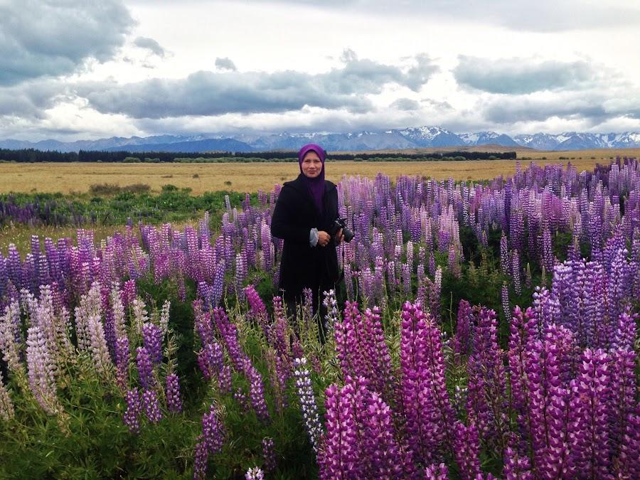 The beautiful Lupines by Rozaitonisah Razali - Instagram & Mobile iPhone ( lupines, flowers, new zealand )