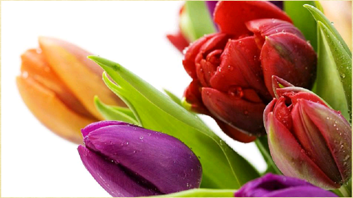 【免費生活App】鮮花背景-APP點子