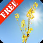 Yellow Field Free icon