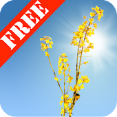 Yellow Field Free