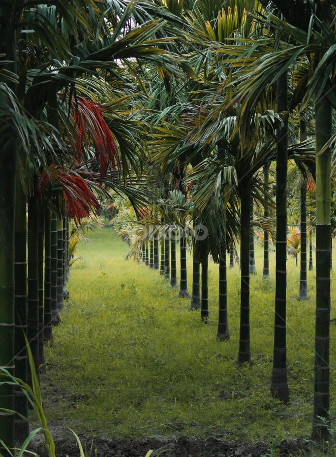 green way.... by TRINETRINI RAMESHA - Nature Up Close Trees & Bushes