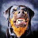 Dogs Funny Wallpaper icon