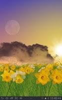 Screenshot of Daffodils Live Wallpaper