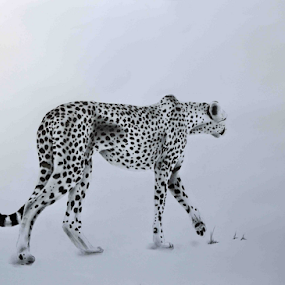 Cheetah1 by Paul Murray - Drawing All Drawing ( cheetah drawing pencil )