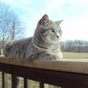 by Sara Humphrey - Animals - Cats Portraits