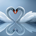 Swan Water LWP icon