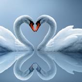 Swan Water LWP