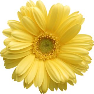 Widgets store: Flower-1