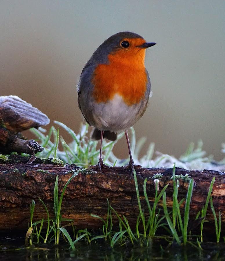 by Bob Rawlinson - Animals Birds ( hide marn )