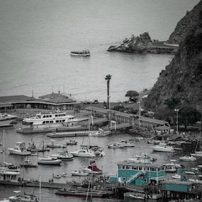 On the Island  by Dory Formiller - Uncategorized All Uncategorized ( large boats, color, small boats, white, pier, boats people, docks, catalina island, black, island )