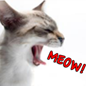 100 cats meowing sounds 1