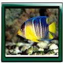 Aquarium Nice Live Wallpaper logo