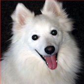 Dog Puzzle: American Eskimo Do