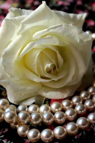 白玫瑰拼圖