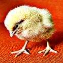 Baby Chickens logo