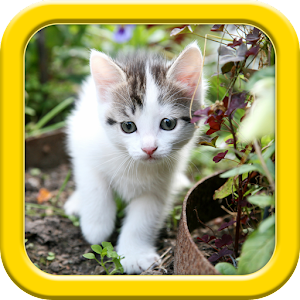 Cats puzzle for PC and MAC