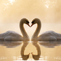 Swans Jigsaw Puzzles icon