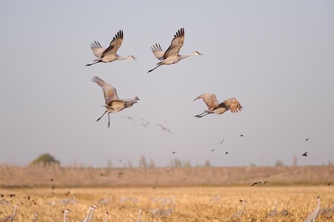 Wetland Reserve Program