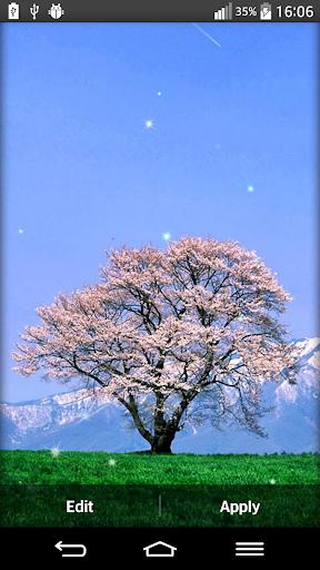 櫻花的動態壁紙