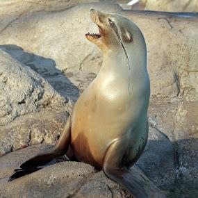 by Jeffrey Sutain - Animals Sea Creatures (  )
