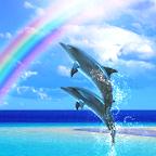 Dolphin Rainbow