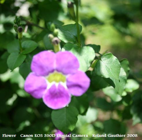 Light purple flower project noah light purple flower mightylinksfo
