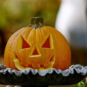 by Alexa Bessler - Public Holidays Halloween