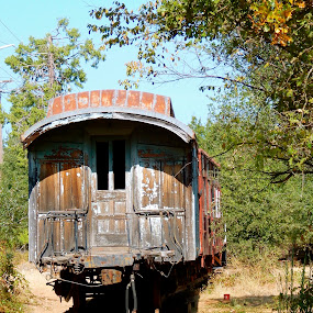Old Wood... by Sherry Gardner - Transportation Trains ( jessie james, tyrone powers, light's out, historical, old train car )
