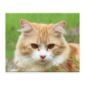 Cats and Kittens Jigsaw Puzzle