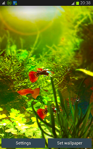 Fish Tank HD Wallpapers App