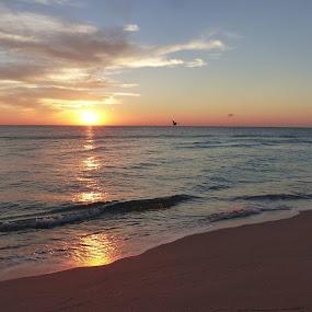 Sunrise in Miami Beach by Francesco Altamura - Landscapes Sunsets & Sunrises ( bird, sand, winter, miami beach, florida, ocean, beach, seaside, seascape, sunrise,  )