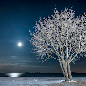 Tree on Snowy Beach by Jeff Klein - Nature Up Close Trees & Bushes ( water, winter, tree, snow, calf pasture, ocean, night, beach, landscape,  )