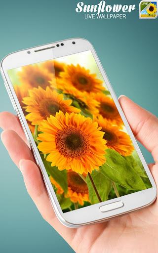 玩免費個人化APP|下載Sunflower現場Wallpaper app不用錢|硬是要APP