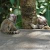 Baby Marmoset 2012