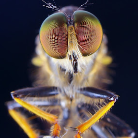 narsis by Rhonny Dayusasono - Animals Insects & Spiders
