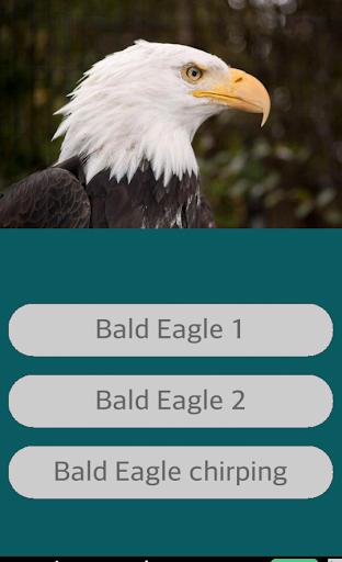 Eagle Sounds