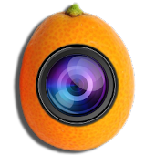 Kamquat