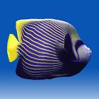 Fishies (School of Fish) icon