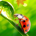Ladybug Video Wallpaper HD icon