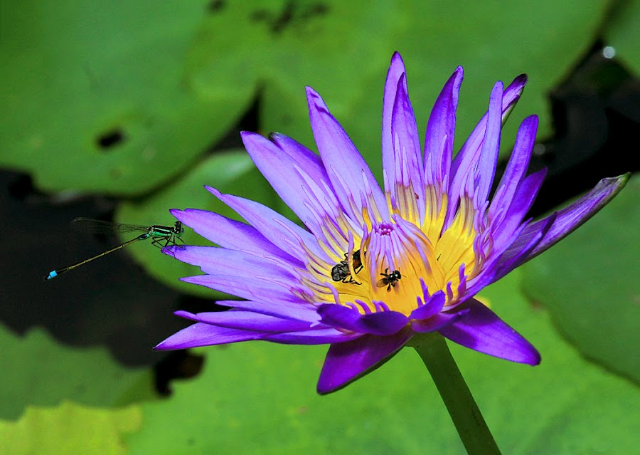 by Thợ Bờ Hồ - Flowers Single Flower