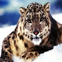 3D Snow leopard logo