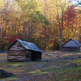 Cabins in the Mountains in the Fall by Bridgette Rodriguez - Novices Only Landscapes ( forests, cabin, earthly, mountain, jade, green, mood, scenic, relaxing, revive, nature, autumn, fall, emotions, cabins, trees, meditation, natural, renewal, the mood factory, inspirational,  )