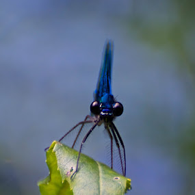 by Don Cardy - Animals Insects & Spiders (  )